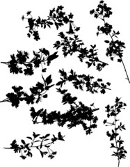 nine cherry tree branch silhouettes
