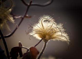 Flower Fluff