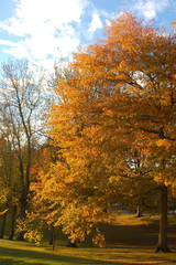 Autumn Trees in Portland Oregon