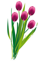 Tulpen Blumenstrauß
