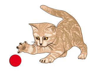 Printed kitchen splashbacks Cats Tigerkätzchen