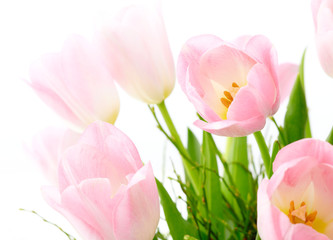 Detail of pink tulips