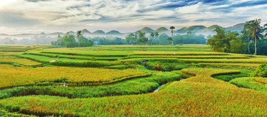 Garden Poster Rice fields Paddy rice panorama