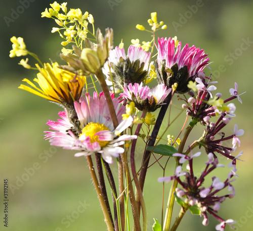 bouquet de fleurs sauvages photo libre de droits sur la banque d 39 images image. Black Bedroom Furniture Sets. Home Design Ideas