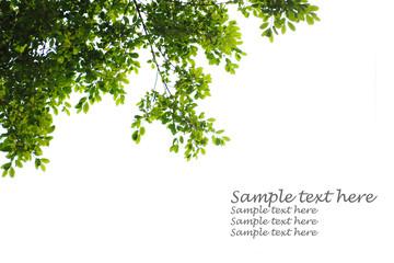 Leaf frame on white background