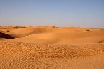 Chameaux dans le désert tunisien