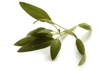 Sabio - Salvia officinalis