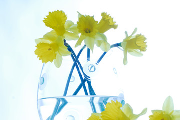 Acrylic Prints Narcissus narcissus,decoration, easter