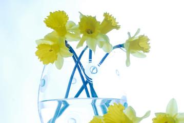 Foto auf AluDibond Narzisse narcissus,decoration, easter