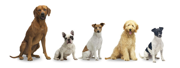 5 sitzende hunde
