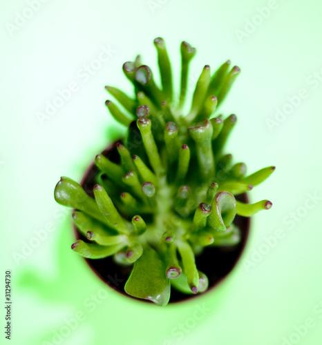 Plante Verte Succulente Photo Libre De Droits Sur La