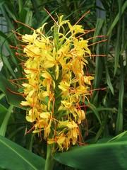 vertical flower