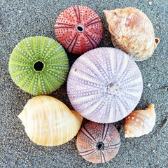 colorful sea urchins and shells on the beach