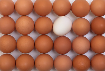 eggs stand in a row