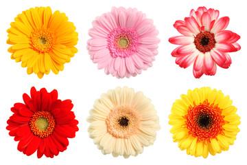 Tuinposter Gerbera Bunte Deko Blumen