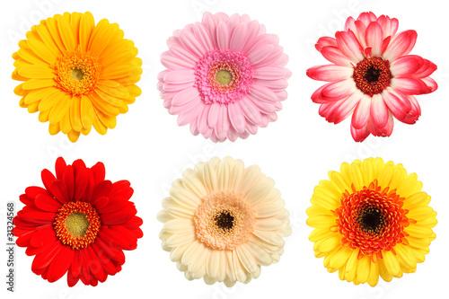 Deko Blumen bunte deko blumen stockfotos und lizenzfreie bilder auf fotolia com