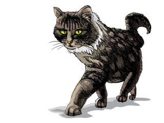 isolated walking cat on white - illustration