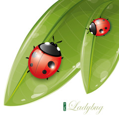 Green leaves design with ladybug, eps-10