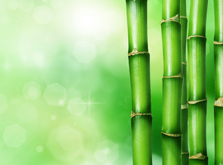 Wall Mural - Bamboo