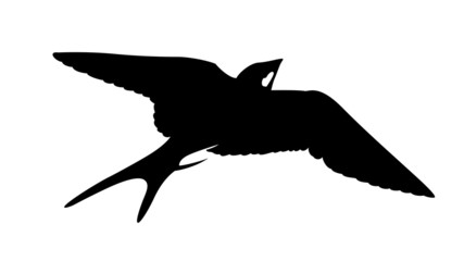 silhouette of the swallow on white background