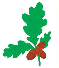Background. A plant. A branch of an oak with acorns