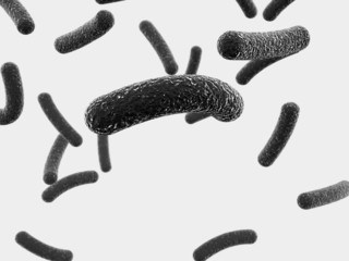Black tubular bacteria on a white background