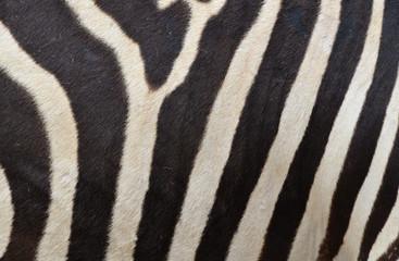 Wall Murals Zebra Pattern of a zebra skin