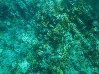 Fonds marins, Guadeloupe