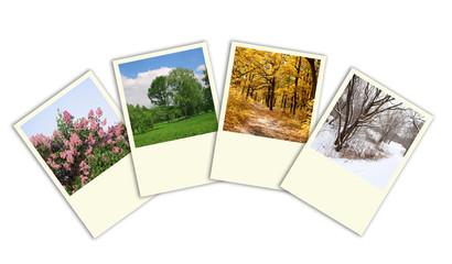 seasons: spring, summer, autumn, winter trees photo frames