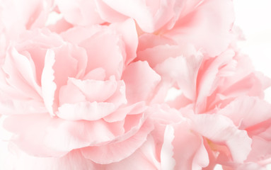 Keuken foto achterwand Roses abstract pink carnations background