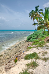Beautiful View of the Coast of Belize