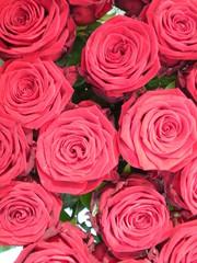 Parterre de roses !