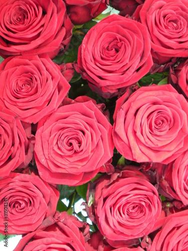 Parterre de roses photo libre de droits sur la banque d 39 images image 31504341 for Parterre de roses photos
