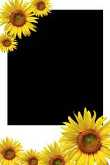 sunflower on photo frame