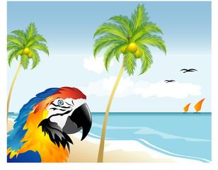 Spiaggia tropicale - Pappagallo