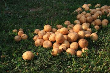 Картофель на траве