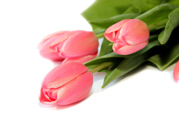 Fototapete - Drei Tulpen