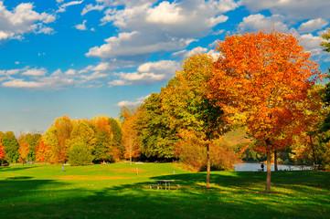 Fall foliage and a field.