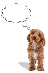 Puppy thinking blank thought bubbles