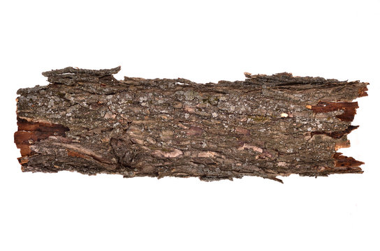 Close-up of isolated broken bark stub log with wooden texture