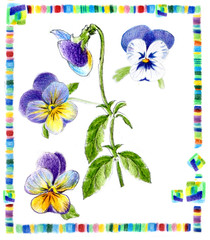 freehand drawing pansy on herbarium card