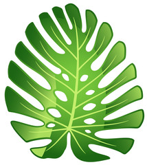 Leaf tropical plant - Monstera.