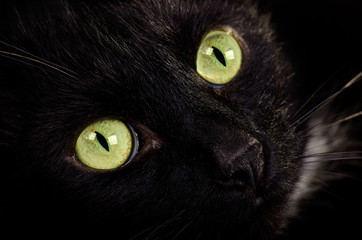 Black green-eyed cat face close up