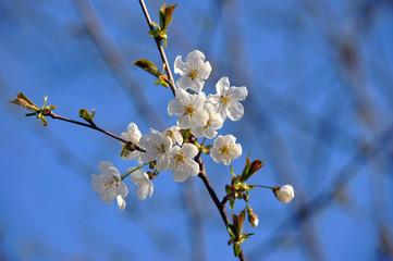 fiori 1270