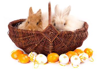 2 süße Kaninchen im Körbchen
