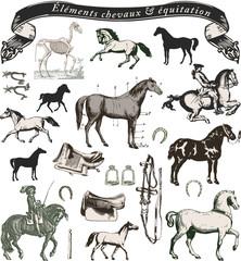 éléments chevaux et équitation