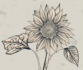 Stand alone. Sunflower