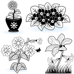 collection of black and white flowers 2