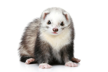 Ferret on a white background Wall mural