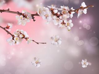 Fototapete - Spring Blossom Design